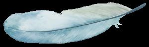 diploma-feather-watercolour
