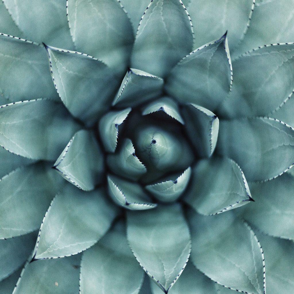 nature-cactus
