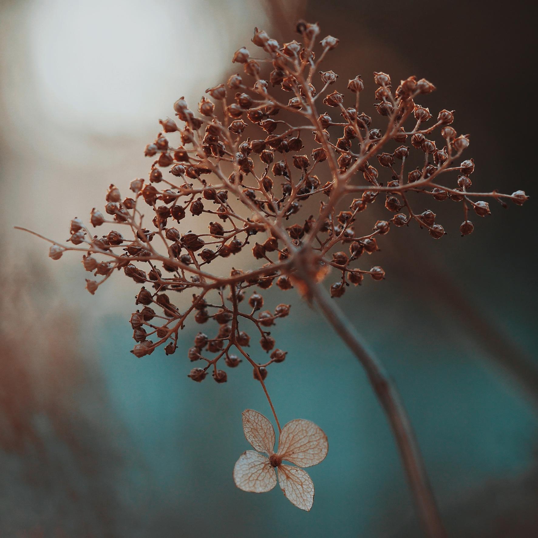 nature-foliage