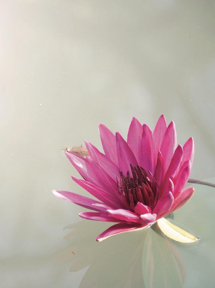 1-1-pink-flower